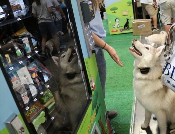 dog vending machine 4