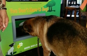 dog vending machine 1