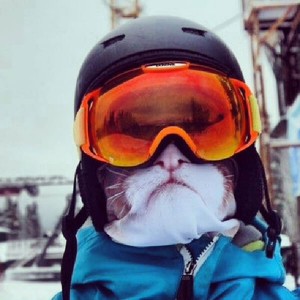 Awesome Animal Ski Masks 2