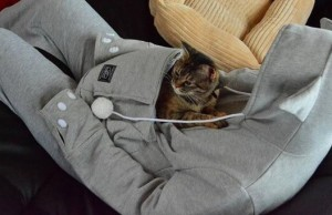 New Hoodie for pets 1