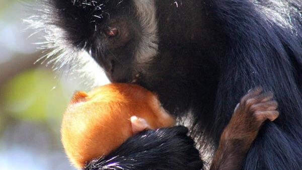 rare orange monkey 3