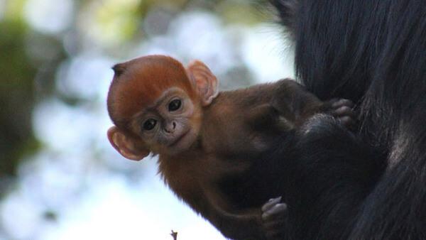 rare orange monkey 5