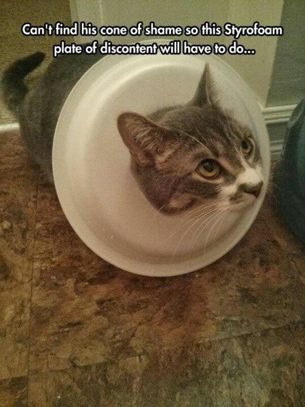 Styrofoam Animal Cat Head
