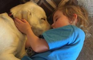Hero Labrador Rescues Little Girl 4