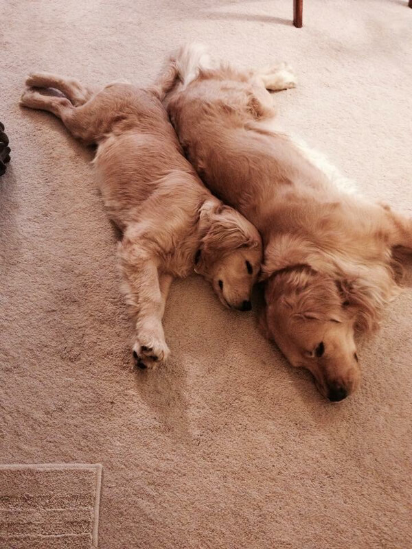 Adorable Dogs 11