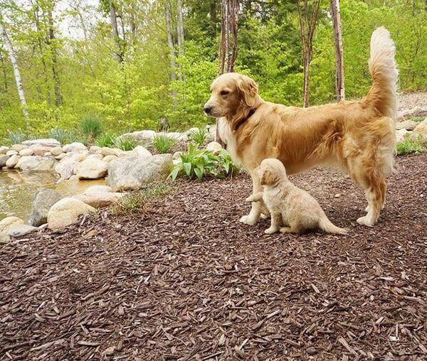 best friends dogs 5