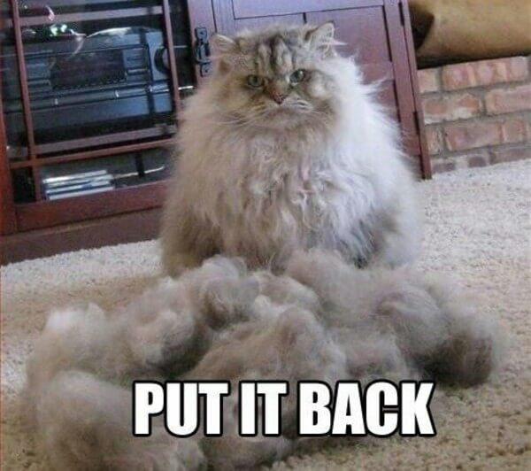 Cat is not amused  3