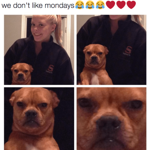 hilarious dog memes about mondays 13