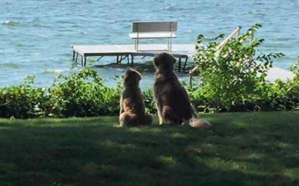 best friends dogs 10