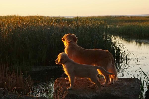best friends dogs 8