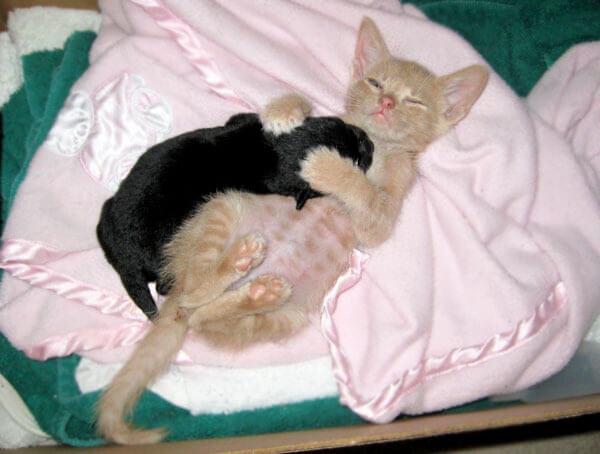 kitten adopts puppy 4