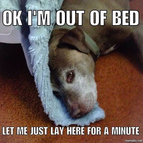 hilarious dog memes about mondays 7