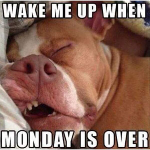 Dog Photos That Hilariously Describe The Mondays Blues 1