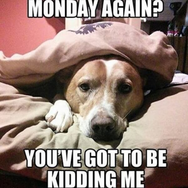 hilarious dog memes about mondays 4