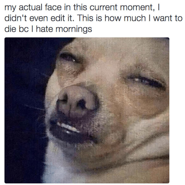 hilarious dog memes about mondays 12