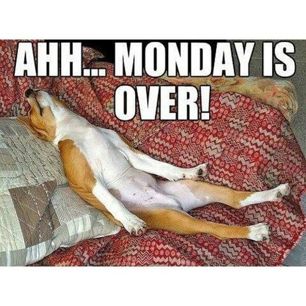 hilarious dog memes about mondays 20