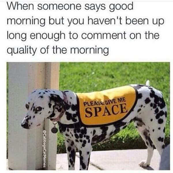 hilarious dog memes about mondays 17