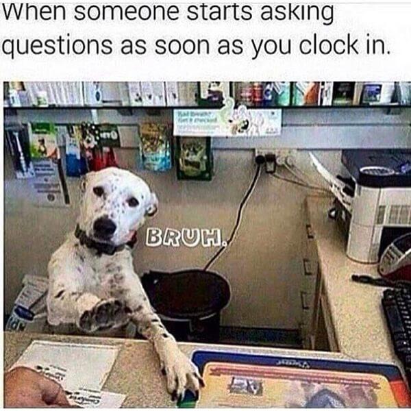 hilarious dog memes about mondays 18