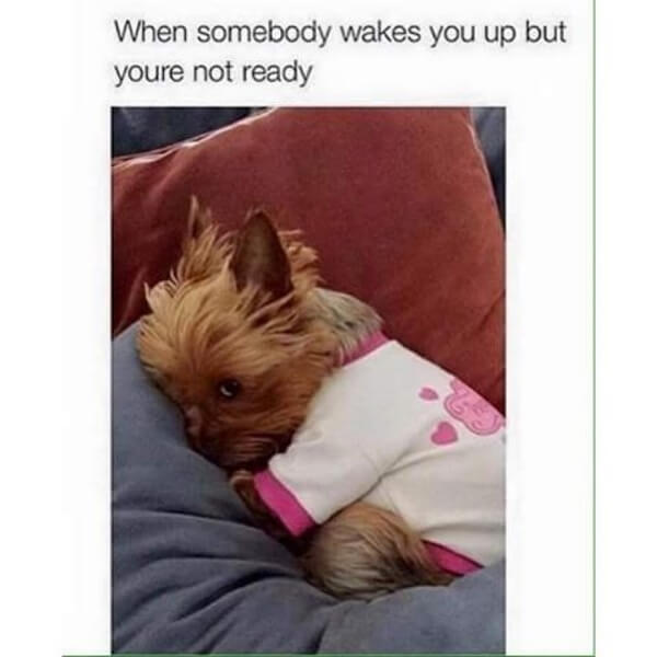 hilarious dog memes about mondays 5