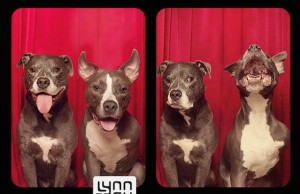 dogs photo booth