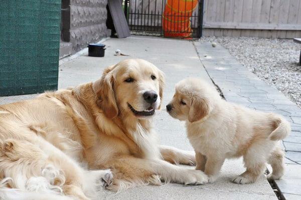 best friends dogs 4