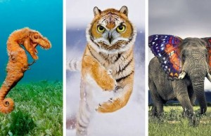 hybrid animals feat (1) (1)