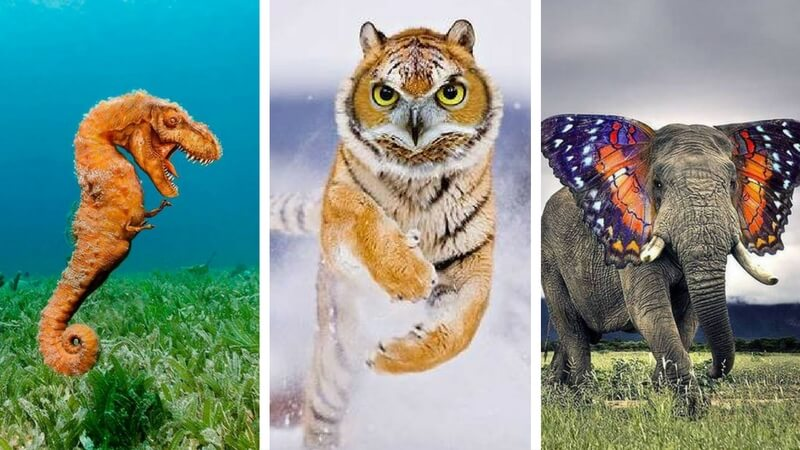 15 Crazy Hybrid Animals That Will Make You Scratch Your Head