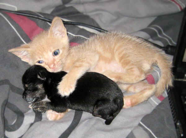 kitten adopts puppy 3