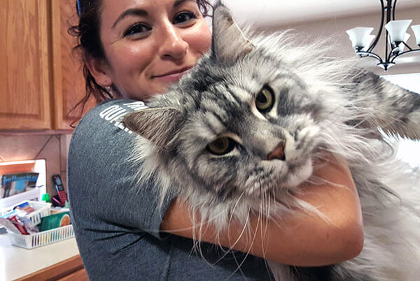 Maine Coon Cats photos 5