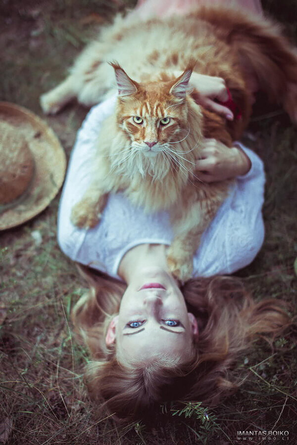 Maine Coon Cat photos 4