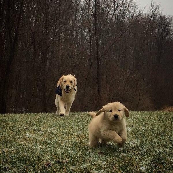 best friends dogs 7