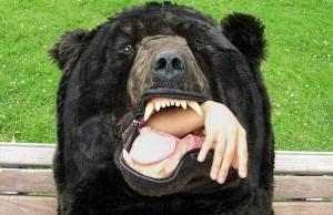bear sleeping bag 6