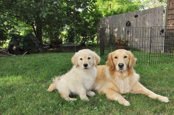 best friends dogs 9