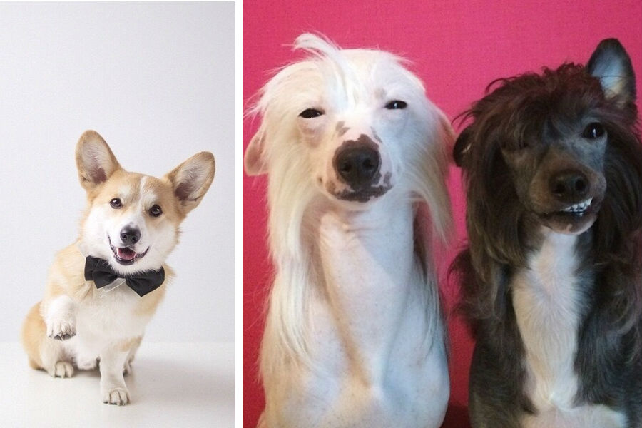 What Your Dog S Breed Says About You