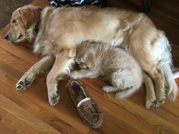 best friends dogs 6