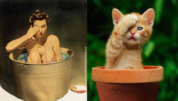 Cats that look like pin-up girls 9