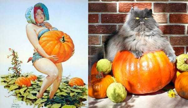 Cats that look like pin-up girls 10