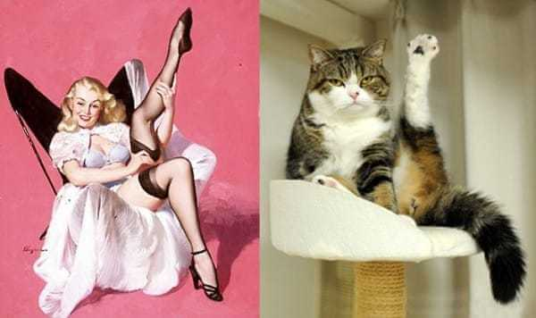 Cats that look like pin-up girls 5