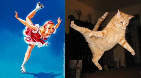 Cats that look like pin-up girls 2