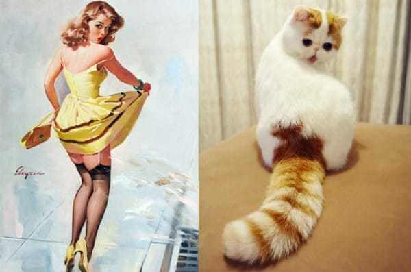 Cats that look like pin-up girls 3