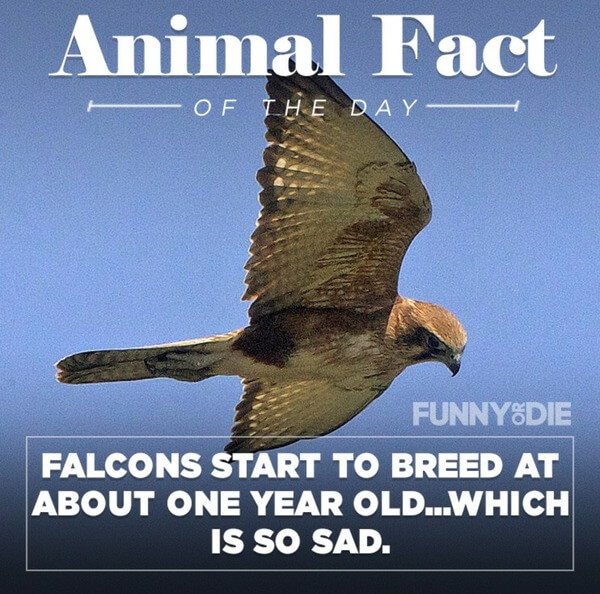 funny animal facts 6