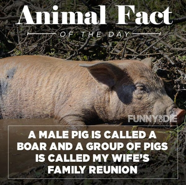 funny animal facts 11