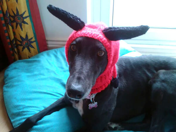 Sweaters For Greyhounds 9