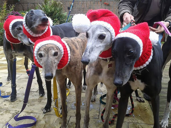 Sweaters For Greyhounds 4