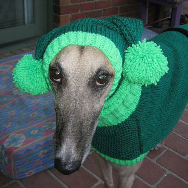 Sweaters For Greyhounds 2