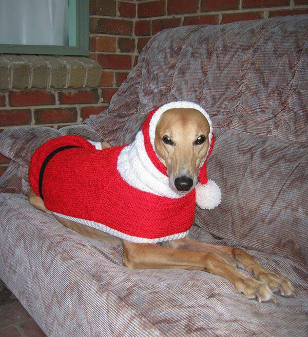 Sweaters For Greyhounds 5