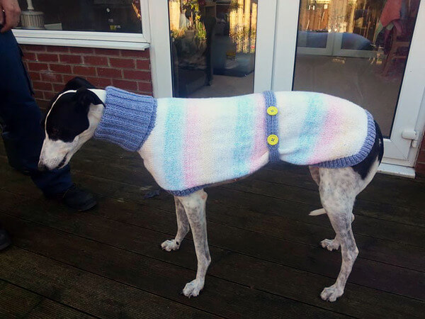 Sweaters For Greyhound 8