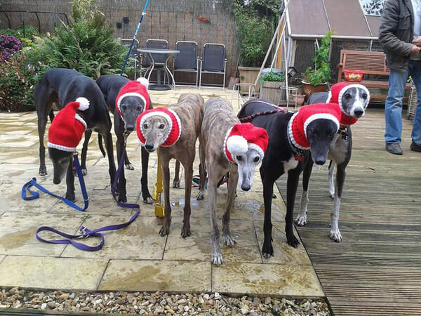 Sweaters For Greyhounds 3