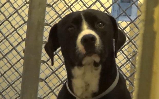 benny-the-dog-poun_3535151b