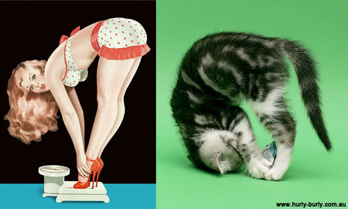 cat pinup girls 3